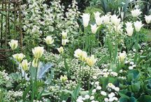 A White Flower Garden / White flowers are my most favorites. Every year, I plant different annuals in my White Flower Garden - saving ideas here for inspiration.