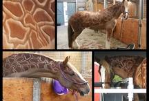 Paarden Scheren