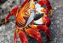 crab and ocean