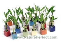 Inspirations: plants