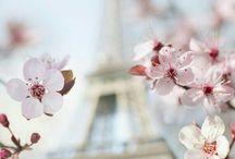 Eiffel tower ... Eifelova věž