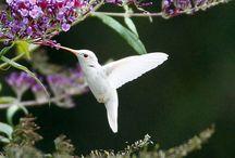 Albino in Nature