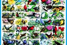 Wild Bird Jigsaw Puzzles