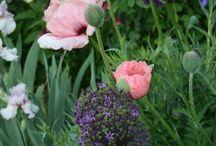 trädgårds blommor