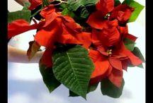 Weihnachten Christmas / Basteln Weihnachten Weihnachtliche Dekorationen wie Tischdekoration, Raumdekoration, Weihnachtsbaum dekorieren, Adventskränze selber machen.