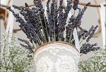 wedding-provence/lavender