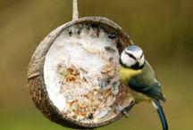 Bird Feeders and outdoor stuff