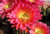 Phoenix / Arizona Love