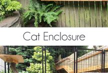 Cats / DIY projects for the cats