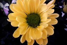 Blomster, sopper og planter / Bildene er tatt selv