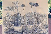 Zeichnungen aquarell