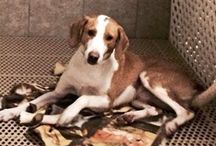Adopted!! / Success stories of our adopted friends.