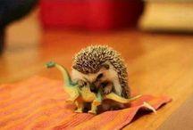 Animalini tenerini - cute stuff