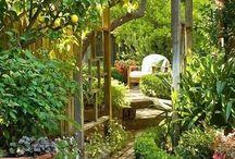 сад / растения