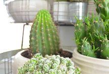 Decorating ~ Succulent