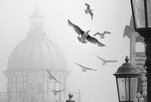 Kove, Wings