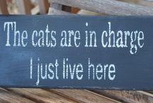 Pet Signs (Cats)