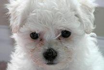 Honden / Puppies en honden