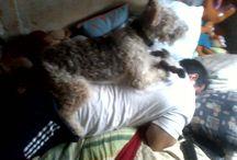 My wire fox terrier