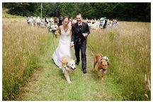 Wedding / by Valérie Barrette