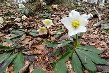 Natur - Pflanzen