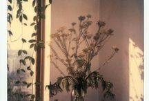 andrei tarkovski, polaroid photograph