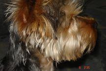 Dafino / My Dog