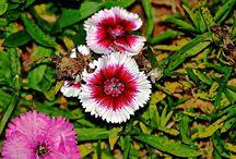Flowers across India / Photos of flowers all across India