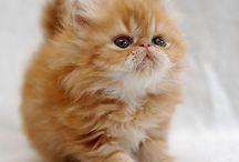 Love Cats.  / Shushus amorosos.