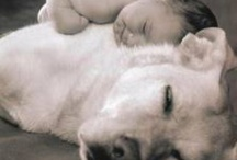 Pets / by Ellen Batzle