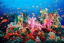 Under The Sea / by Marcy Gossett