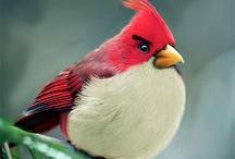 Pássaros e aves
