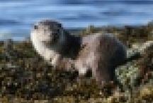 Wildlife / Highland wildlife in and around  Mallaig Morar and Arisaig