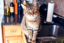 Cat Behavior Tips / Tips for cat owners to help deal with behavior issues in their feline.