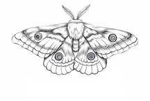Butterfly x Moth