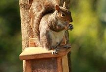 Products for all your garden wildlife / Everything Wildlife Garden Products