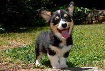Dogs I love <3 / by Christina Rosenberg
