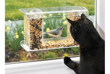 Katzen Bespassung