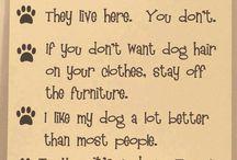Doggy wisdom
