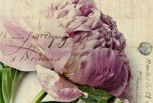 Nature Flowers,arrange,bouquet (prírodne kvety aranžovanie,kytice)