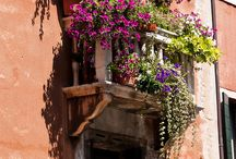 Whimsical Window Boxes