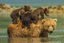 adorablebabybears