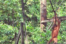 Sandakan, Borneo / Places we have seen in Sandakan