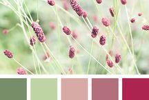 LGWSD colour palettes