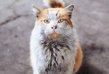 Beaux chats adorables