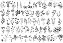 Fleurs dessins