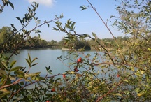 Panaro east side / S.Anna pond