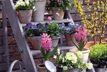 VIVAN LAS TERRAZAS / Nos encantan las terrazas en cualquier época del año, pero es indiscutible que es en verano cuando lucen más espectaculares. ¡Vivan las terrazas llenas de flores!