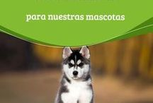 perros (vinagre de manzana )
