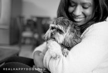 Sweet Dog Photos / Sweet dog photos by Real Happy Dogs photography